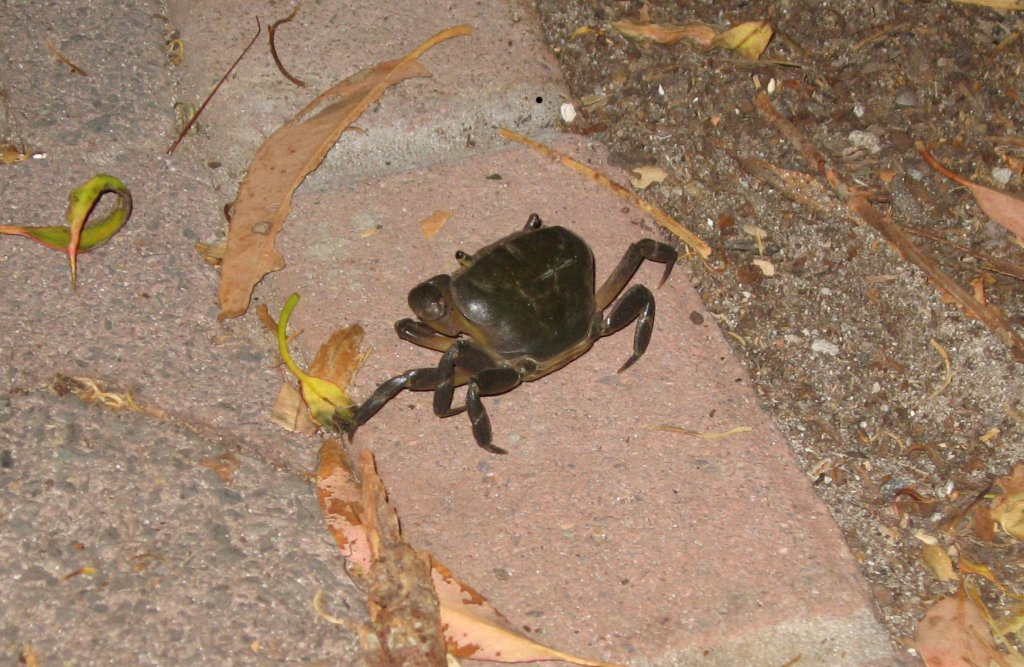 Crab in the driveway